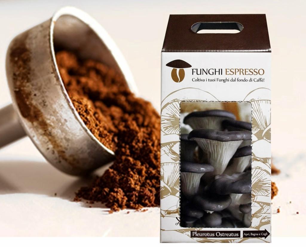 coltivare funghi con fondi di caffè bar.it