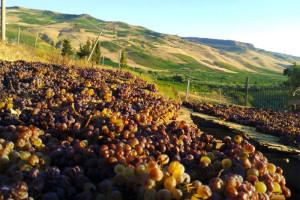 Il Passito di Pantelleria è uno dei vini caratteristici siciliani
