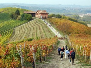 Numeri da record per il turismo del vino