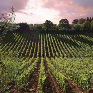 Il nuovo sito dedicato all'acquisto di vini pregiati