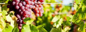 Numeri in crescita per i vini aromatici, sia nelle vendite che nella produzione