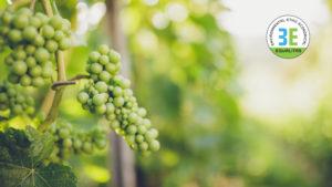 Un progetto per recuperare la biodiversità del vino
