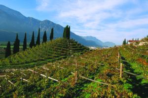 La Cantina Sociale di Trento produce vini biologici