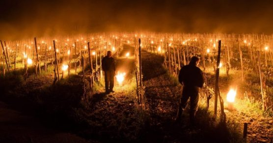 falò tra le vigne per proteggere i filari