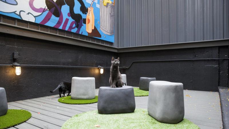 bar per gatti